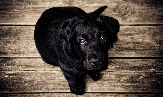 Eukanuba a kutyatápok világában